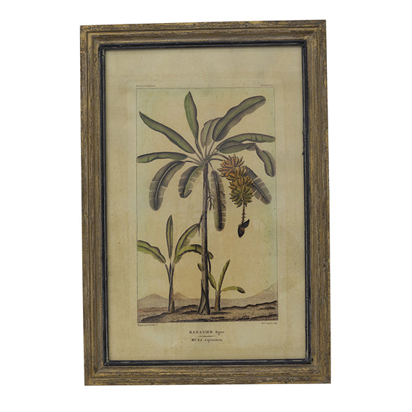 Botanical Print Wall Art - Banana Palm Tree
