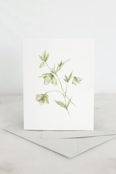 Watercolor Hellebore Card