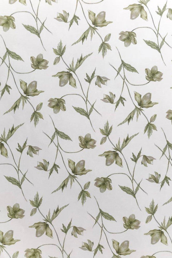 Hellebore Gift Wrap