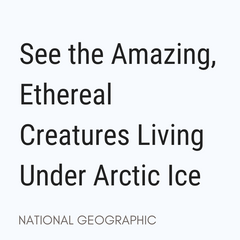See the Amazing, Ethereal Creatures Living Under Arctic Ice