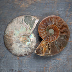 Ammonite Fossil Pair, Opalized, Rainbow Iridescent