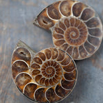 Ammonite Fossil Pair, Opalized, Red Iridescent