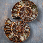 Large Ammonite Fossil Pair, Opalized, Iridescent