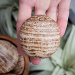 Aragonite Palm Stone, Large, Round,