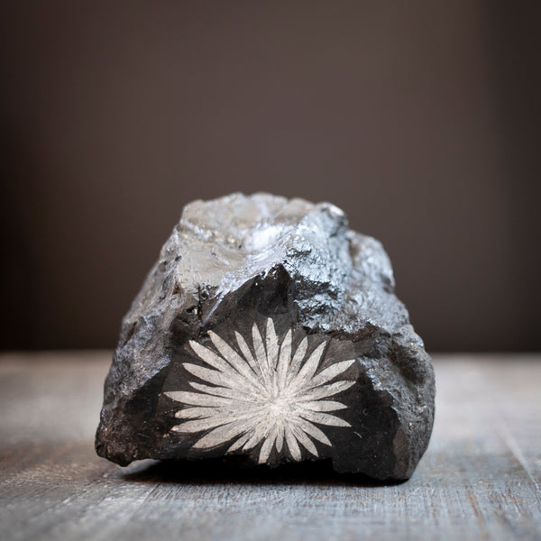 All Natural Chrysanthemum Stone - This is a large, Chrysanthemum Stone specimen with a large, full white flower centered in the middle of a black stone that stands for display. Adorable shape! all-natural, no enhancements. You will receive the exact Chrysanthemum stone shown. These make beautiful, unique gifts for gardeners or create an everlasting 'bouquet' for someone special.