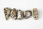 large dalmatian jasper tumbled stones. Tan stones with black spots