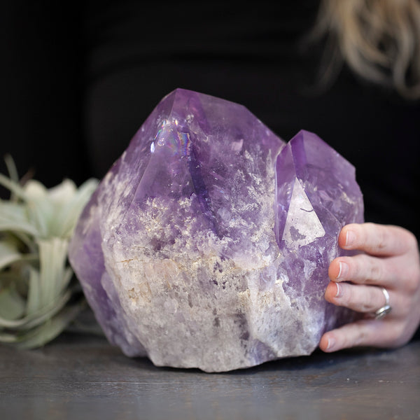 Giant Amethyst Point Cluster, 12lb