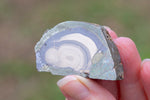 Schalenblende specimen with ideal concentric bands of Galena, Sphalerite, and Wurzite.