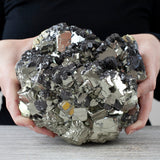 XL Pyrite Crystal with Galena, 14bs
