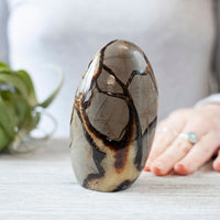 Septarian Freeform, Fossil