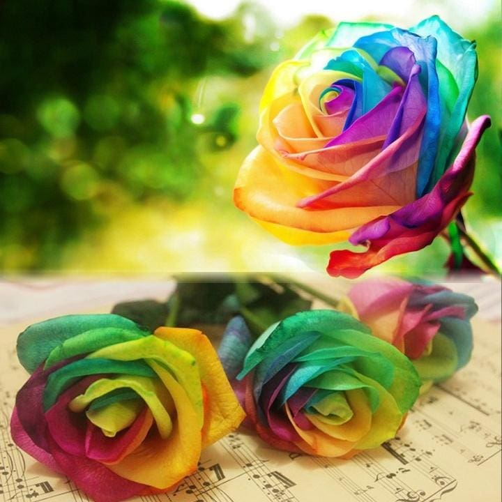 New 500Pcs Colorful Rainbow Rose Flower Seeds Multi Color Yard Garden Decor