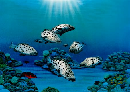 Exploring Reef Waters - Small Reef Images Print by Darrell Hook