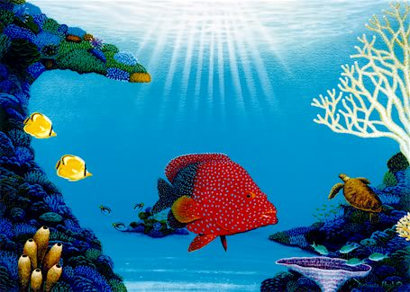 Coral Garden - L/E Print by Darrell Hook