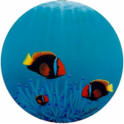 Clowns of the Reef - Port Hole Print by Darrell Hook