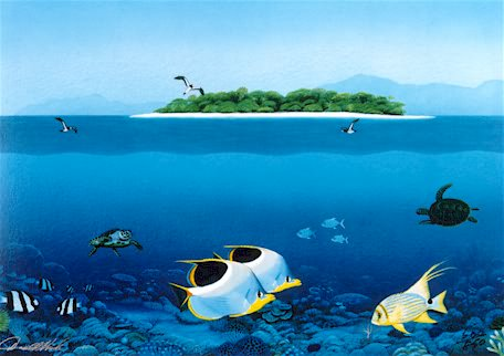 Harlequins Of The Reef - Print by Darrell Hook