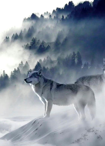 Diamond Painting White Wolf On Mountain - OLOEE