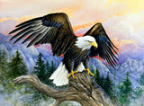 Diamond Oloee Mountain Eagle - OLOEE