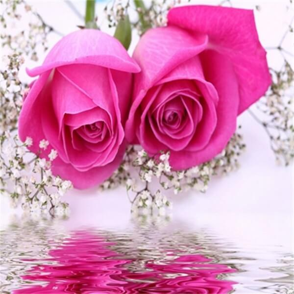Diamond Painting Pink Roses - OLOEE