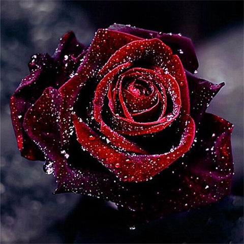 Diamond Painting Red Rose - OLOEE