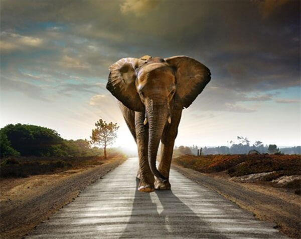 Diamond Oloee Elephant On A Journey - OLOEE