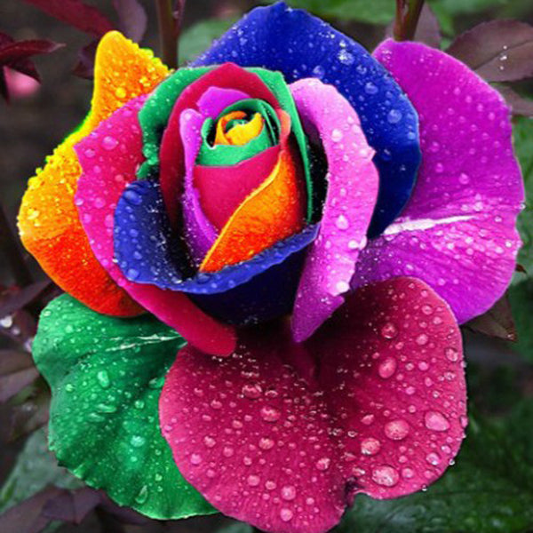 Diamond Painting Colorful Petal Rose - OLOEE