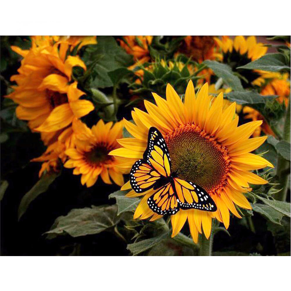 Sunflower Amp Butterfly 5d Diamond Painting Kits Oloee