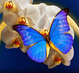 Diamond Painting White Orchid Blue Butterfly - OLOEE