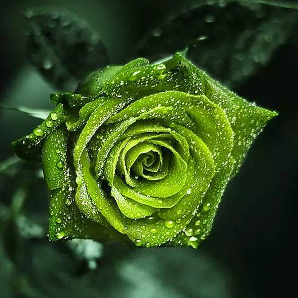 Diamond Painting Green Rose - OLOEE