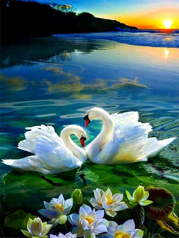 Sunset Swan Couple