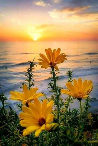 Spring Flowers and Sunset