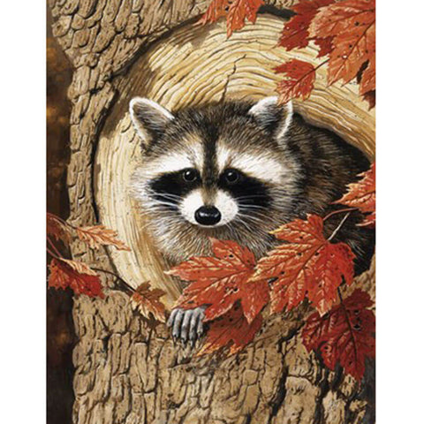 Raccoon In Fall