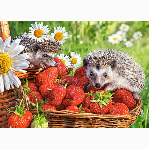 Strawberry Hedgehogs