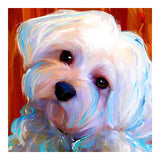 Maltese Dog Pet - OLOEE
