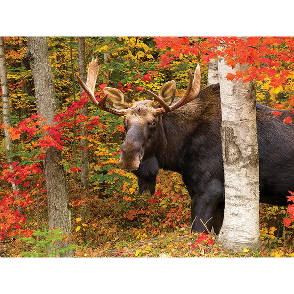 Diamond Painting Alaska Moose - OLOEE