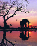 Diamond Painting Beautiful Sunset Elephant - OLOEE