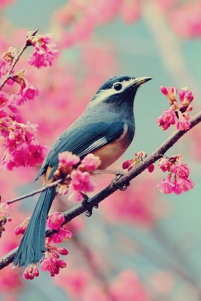 Diamond Painting Bird on Sakura Tree - OLOEE