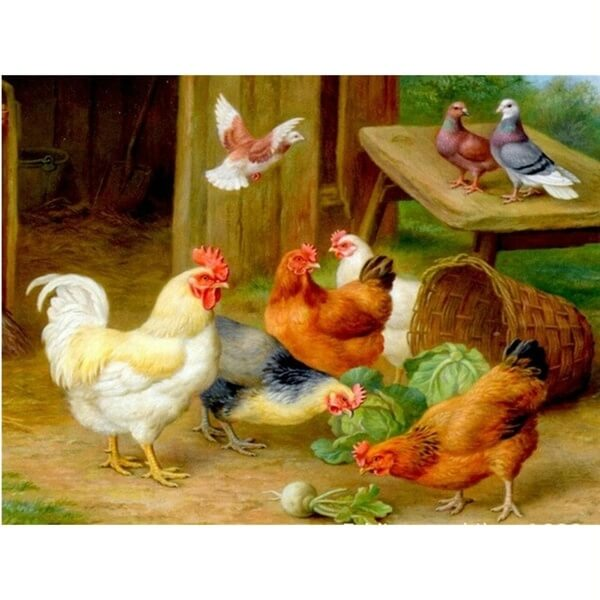 Diamond Painting Rooster Hen Chicks - OLOEE