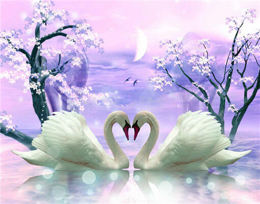 Diamond Painting 5D Swans Love - OLOEE