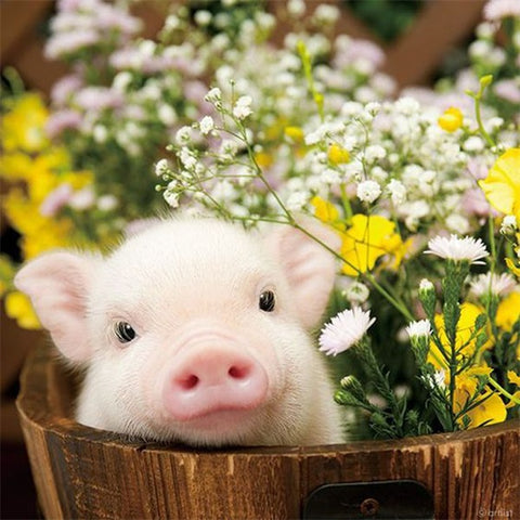 Diamond Painting Pig and Flowers - OLOEE