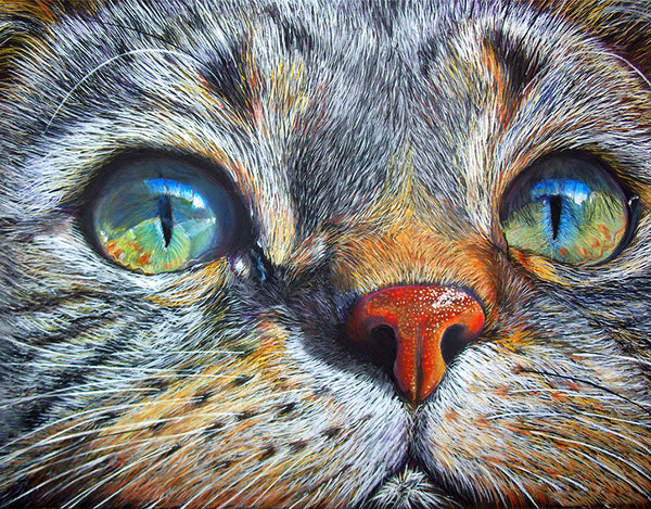 Diamond Painting Galaxy Eyes Cat - OLOEE