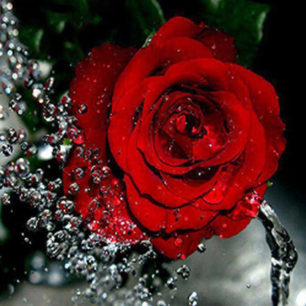 Diamond Painting Beautiful Red Rose - OLOEE