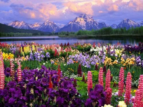Diamond Painting Sunset Field of Flowers - OLOEE