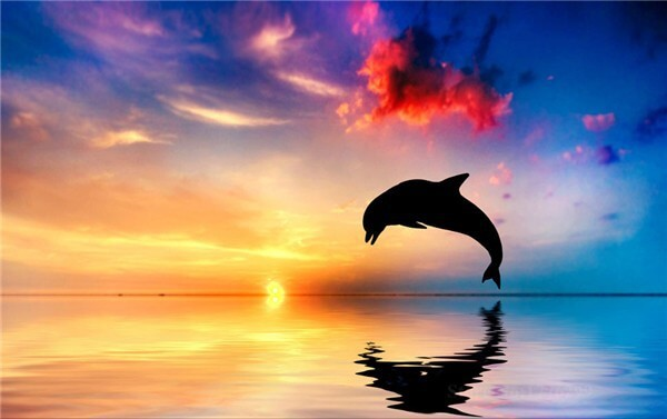 Diamond Painting Dolphin Jump Up The Water - OLOEE