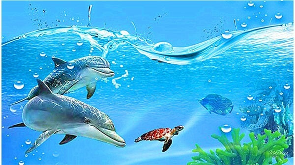Diamond Oloee Turtle and Dolphin Swim - OLOEE