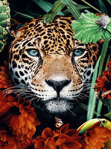 Jungle Leopard