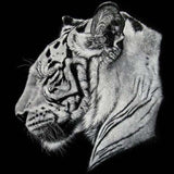 Diamond Painting Tiger Animal Art - OLOEE