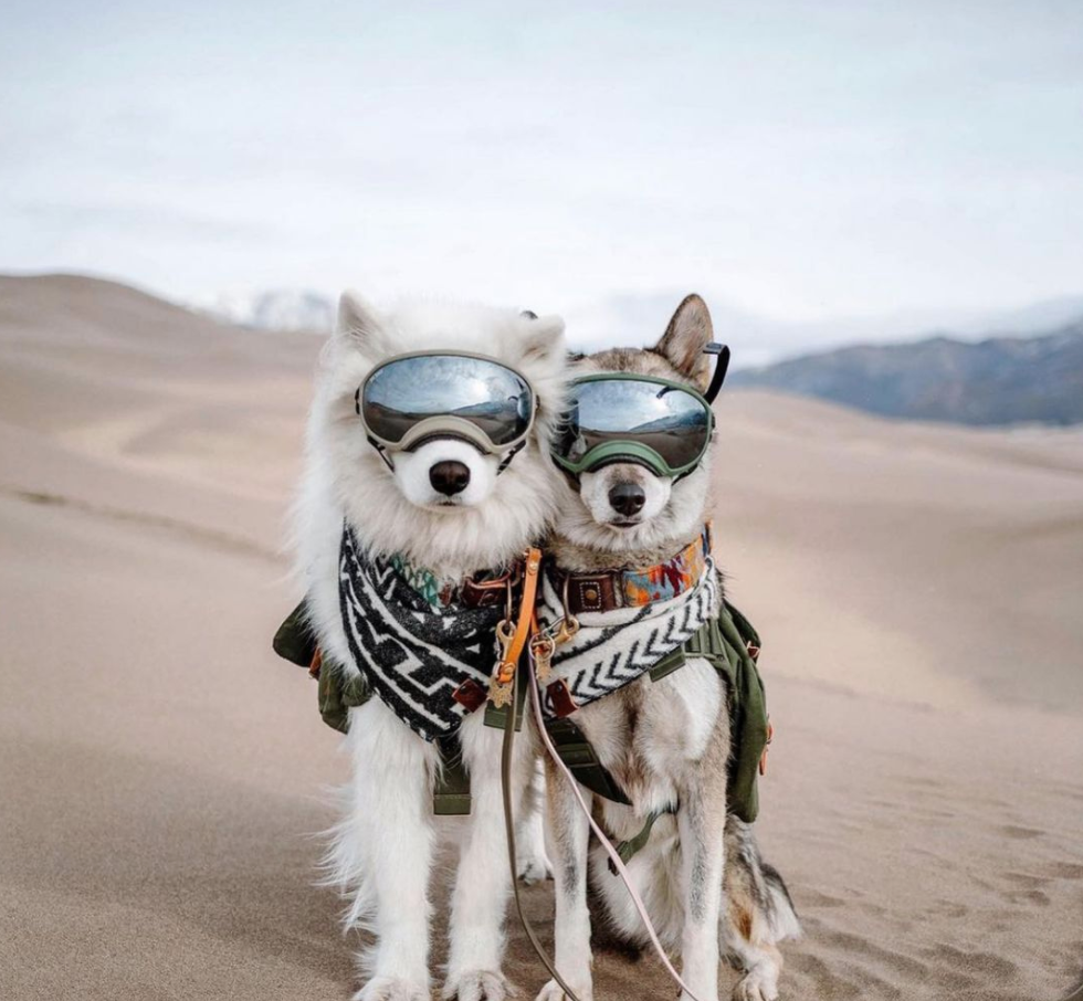 dog goggles for hiking