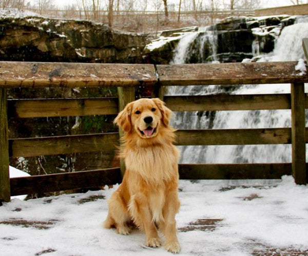 Cuyahoga National Park Dog-Friendly