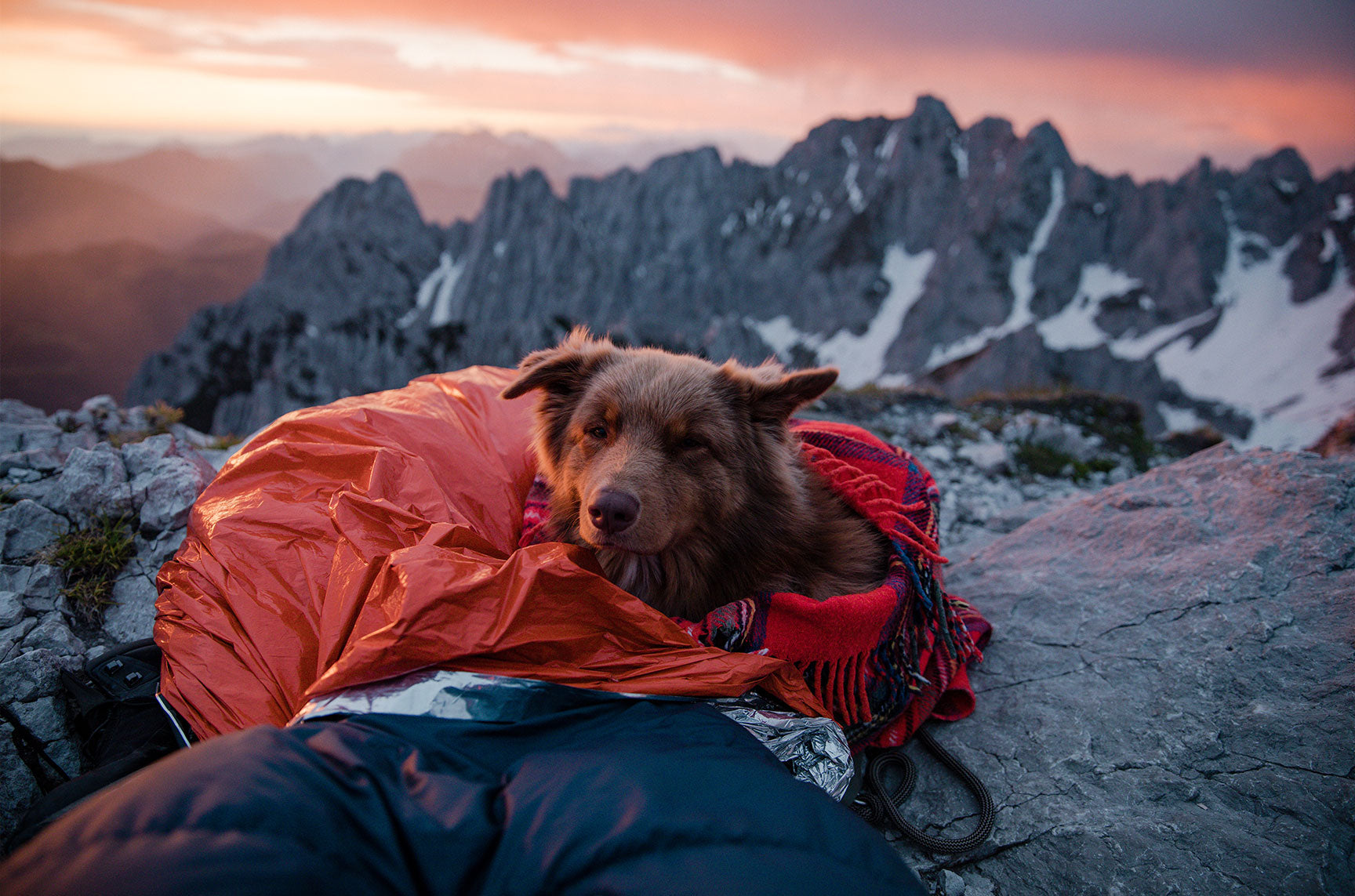 dog camping sleepingbag