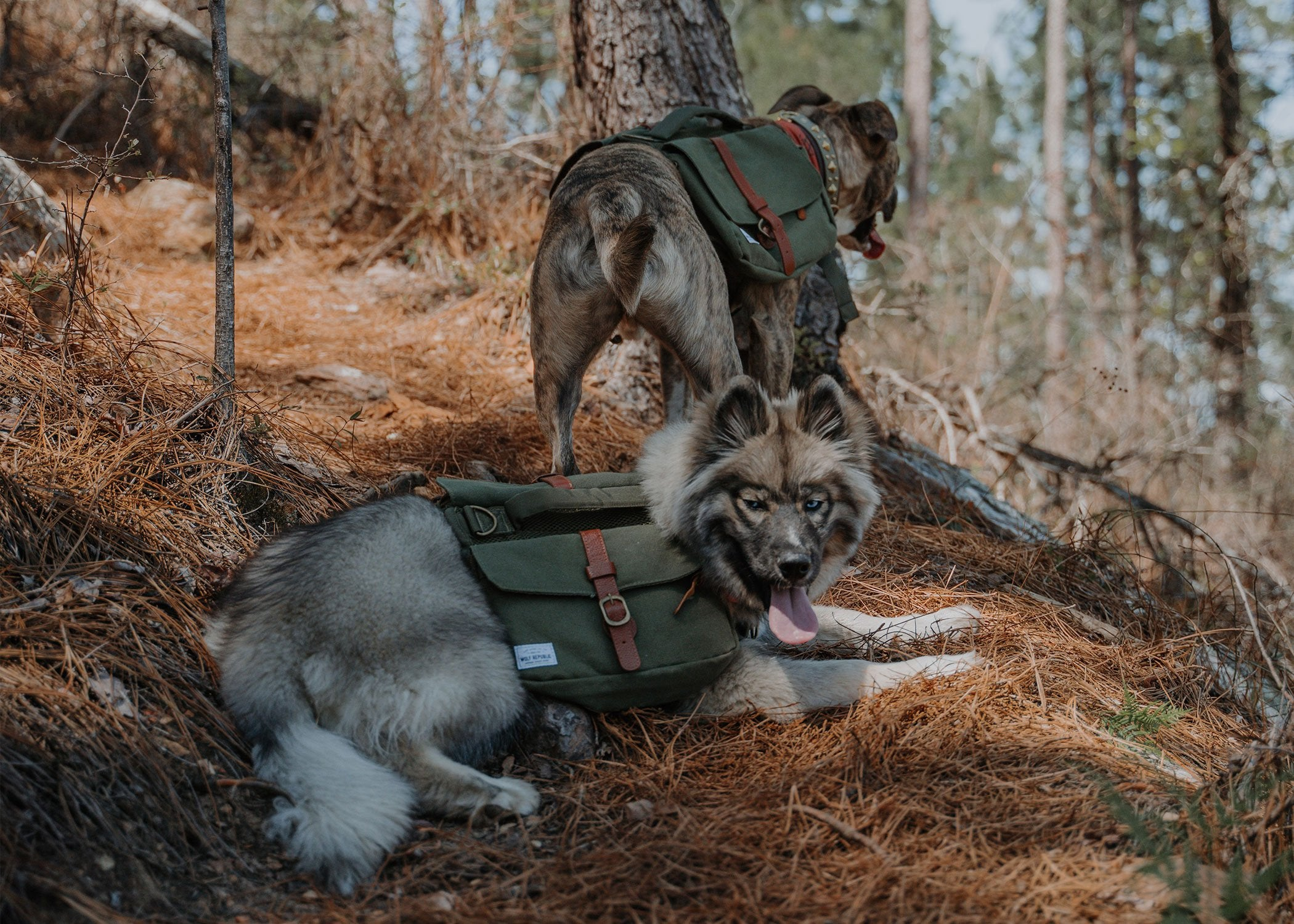 dogs hiking with dog backpacks in the forrest